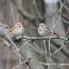 Schenley Park Small Birds 1-12 :